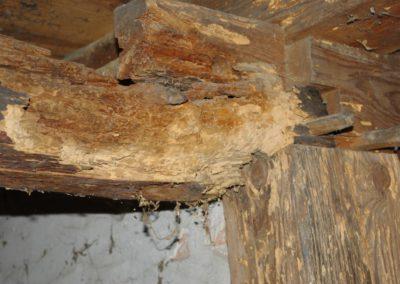 Niszczenie drewna przez owady