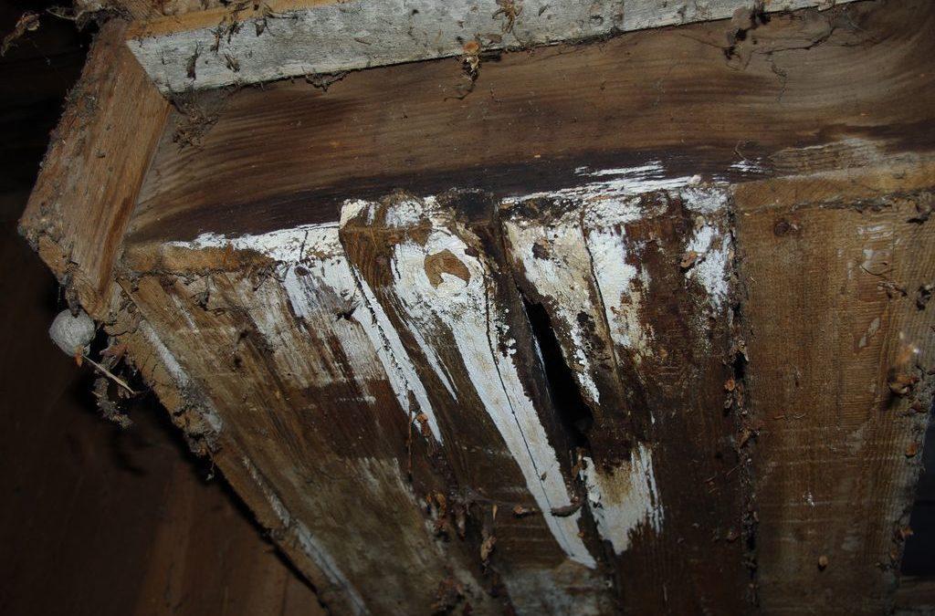 Drewno i Grzyby
